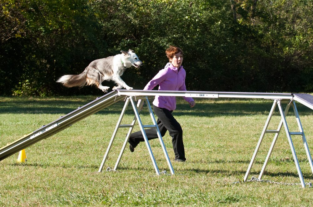 Border Collie Dog Walk