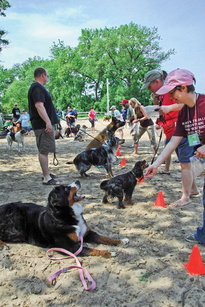 Dog Friendly Beach Games