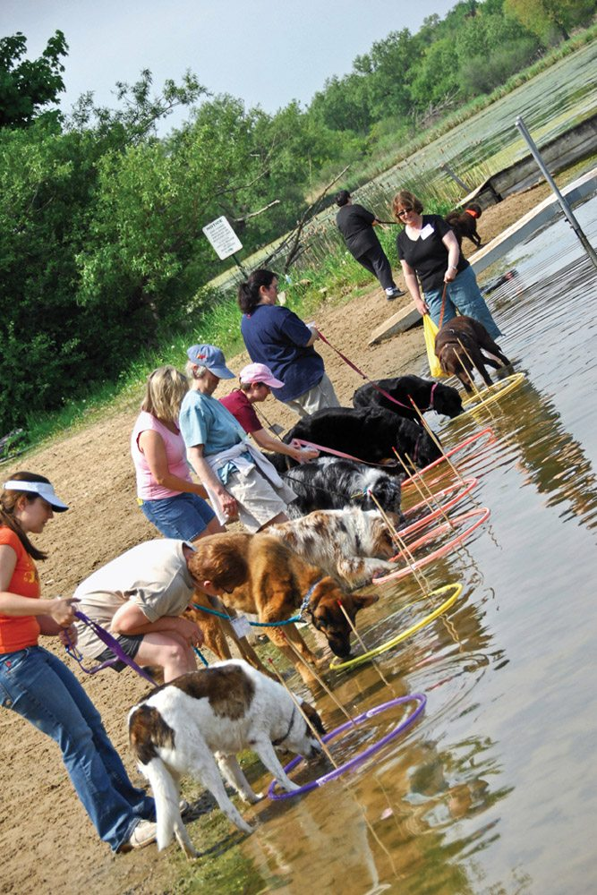 Dogs Hula Hoops Beach