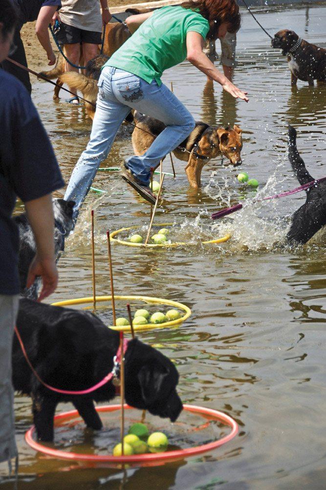 Dogs Hula Hoops Tennis Balls