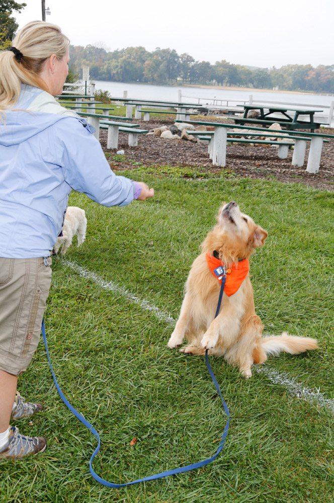dog beach games