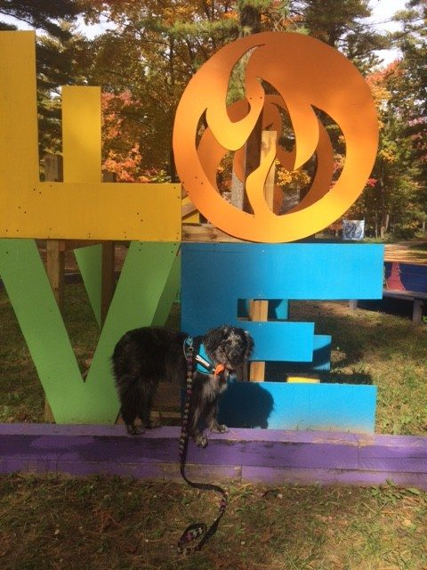 Love at Camp Dogwood