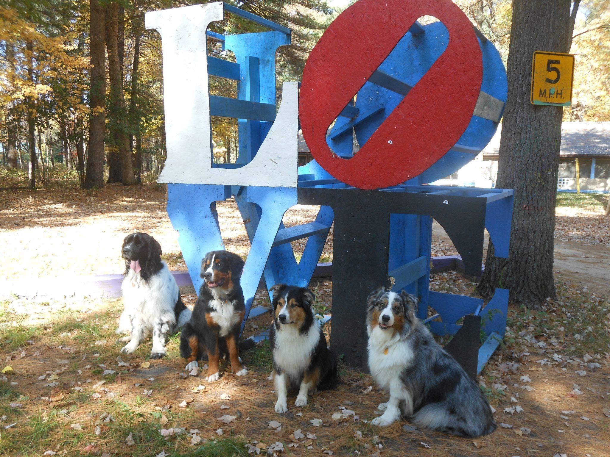 """LOVE"" Dogs"