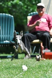 Lure Coursing is the Best